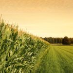 It's time to plan for 2021 and beyond in the agriculture industry